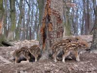 Budakeszi Vadaspark – Jobb, mint az állatkert?